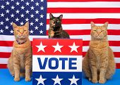 One Tortoiseshell Cat Sitting Behind A Podium With Vote Sign On The Front, Orange Tabby Cat Sitting  poster
