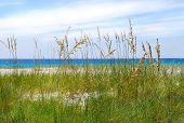 stock photo of sea oats  - Beautiful Sea Oats with Turquoise Sea in distance - JPG