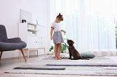 Adorable Chocolate Labrador Retriever And Little Girl At Home poster