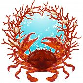 pic of blue crab  - Vector crab and red coral frame - JPG