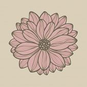hand drawn flower, vector