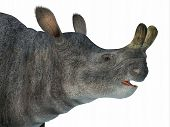 Brontotherium Mammal Head 3d Illustration - Brontotherium Was A Horned Herbivorous Mammal That Lived poster