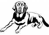 stock photo of labradors  - black and white sketch a portrait of a close - JPG