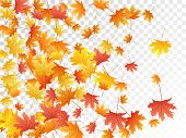 Maple Leaves Vector, Autumn Foliage On Transparent Background. Canadian Symbol Maple Red Orange Gold poster