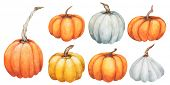 Pumpkin. Watercolor Hand painted pumpkin for halloween and Fall on white background. Autumn harvest. poster