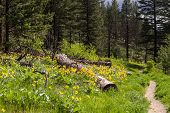 foto of wildflowers  - Nature trail through meadow of wildflowers into trees - JPG