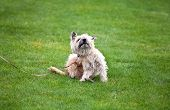 stock photo of flea  - funny scratching dog with fleas on grass - JPG