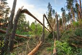 stock photo of hurricane wind  - Windfall in forest - JPG