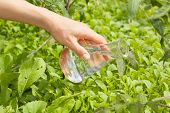 stock photo of biotech  - flask with clear water or fertilizer - JPG