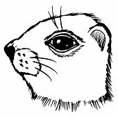 image of gopher  - hand drawn sketch cartoon illustration of gopher - JPG