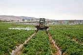 stock photo of strawberry plant  - A Crop Sprayer - JPG
