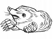 picture of mole  - hand drawn sketch cartoon illustration of mole - JPG