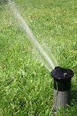 Sprinkler Watering Green Lawn In Summer poster