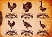 image of rooster  - vector diagram cut carcasses chicken turkey goose duck - JPG