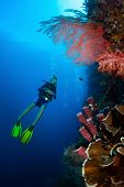 stock photo of bottomless  - Diver in the depth watching coral reef wall - JPG
