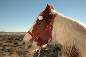 stock photo of horse wearing santa hat  - Pinto gelding wearing a Christmas hat in New Mexico landscape - JPG
