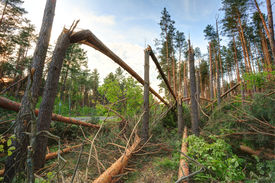 picture of hurricane wind  - Windfall in forest - JPG