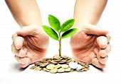 stock photo of environment-friendly  - Palms with a tree growing from pile of coins  - JPG