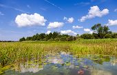 picture of day-lilies  - Summer landscape with water lilies on a sunny day - JPG