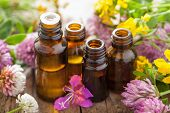 pic of essential oil  - essential oils and medical flowers herbs  - JPG
