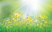 picture of sunshine  - Sunshine green background with colorful flowers field - JPG