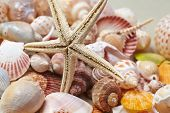 image of cockle shell  - nice shells - JPG