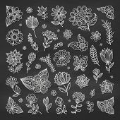 pic of greeting card design  - Set of floral elements on the chalkboard - JPG