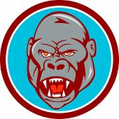 pic of gorilla  - Illustration of an angry gorilla ape head set inside circle on isolated background done in cartoon style - JPG