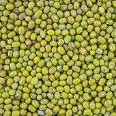 image of mung beans  - texture of mung bean grain for background - JPG