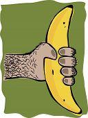 foto of ape  - Cartoon image of an ape hand holding a banana - JPG