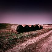 picture of dirt road  - Dirt Road Leading to the Farmhouse in Tuscany at Night Toned Picture - JPG