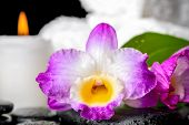pic of calla  - closeup of spa still life purple orchid dendrobium candle and green leaf Calla lily with dew on black zen stones - JPG