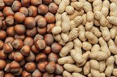 stock photo of cobnuts  - peanuts and hazelnuts on the table background - JPG