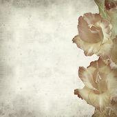 foto of gladiolus  - textured old paper background with orange gladiolus - JPG