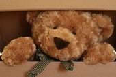 picture of teddy-bear  - close - JPG