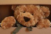 image of teddy-bear  - close - JPG
