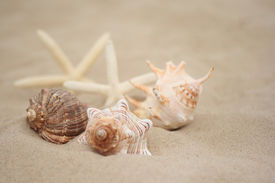 image of beach holiday  - collection of shells on the beach  - JPG