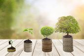 Growing Money Or Plant On Coins Business Success ,trees Growing On Pile Of Coins Money In Sun Flare  poster