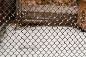 Metal Mesh Closeup. Metal Mesh In The Snow. Grid Texture. poster
