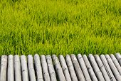 Bamboo Bridge On Paddy Field In Thailand Countryside poster