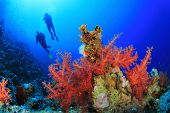 foto of coral reefs  - Two Scuba Divers dive over a beautiful Coral Reef in clear blue Sea - JPG