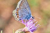 Macro Photo Of A Butterfly Close-up. A Butterfly Sits On A Flower. The Moth Sits On A Flower And Dri poster