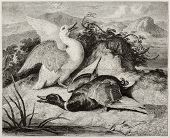 image of life after death  - Old illustration of duke and drake - JPG