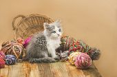 Little Funny Kitten With A Ball Of Knitting In Multiple Colors. poster