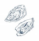 Seafood Delicacy Bivalve Clam Oyster Monochrome Hand Drawn Vector Illustration. Marine Product For F poster