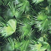 Tropical Leaves Pattern Palm Plants. Green Leaf Monstera Seamless. Artistic Photo Collage For Floral poster