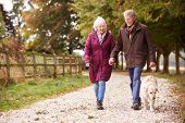 Active Senior Couple On Autumn Walk With Dog On Path Through Countryside poster