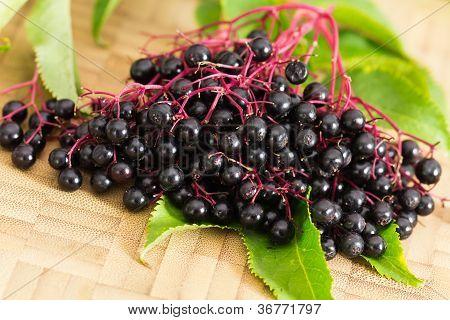 Постер, плакат: Осенью еще жизнь с спелые ягоды черные старший, холст на подрамнике