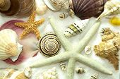 picture of crustations  - Seamless background pattern of seashells starfish sea snails on a bed of white sand - JPG