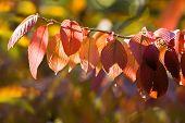 Colors Of Autumn On Sunny Day poster
